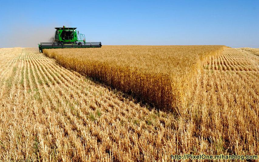 افزایش نرخ خرید تضمینی گندم در راستای حمایت از تولید ملی است
